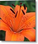 Botanical Beauty 1 Metal Print