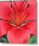 Botanical Beauty 2 Metal Print