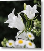 Botanical Beauty In White Metal Print