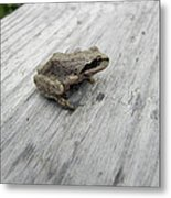 Botanical Gardens Tree Frog Metal Print