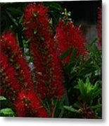 Bottle Brush Metal Print