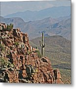 Bottom Of The Sierra Ancha Forest Metal Print