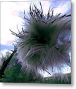 Bottomland Thistle Metal Print