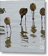 Shorebirds 1 Metal Print