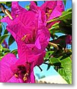 Bougainvillea Beauty Metal Print