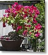 Bougainvillea Bonsai Tree Metal Print
