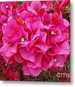 Bougainvillea Flowers Metal Print