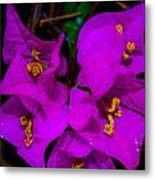Bougainvillea Matte Touch Metal Print by Lisa Cortez