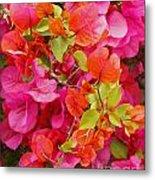 Bougainvillea Multi-colored Flowers Metal Print