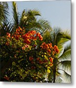 Bougainvilleas And Palm Trees Swaying In The Wind In Waikiki Honolulu Hawaii Metal Print