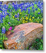 Boulder And Bluebonnets Metal Print by Thomas Pettengill