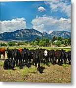 Boulder Beef Metal Print