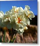 Bouquet Of Narcissus Metal Print