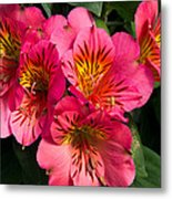 Bouquet Of Pink Lily Flowers Metal Print