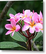Bouquet Of Pink Plumeria Metal Print