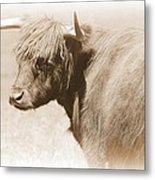 Bovine With Bangs Metal Print