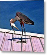 Bowing Blue Heron Metal Print