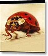 Bowing Ladybug . Art And Frame Print Only Metal Print