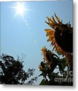 Bowing To The Sun Metal Print