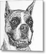 Boxer Dog Sketch Metal Print
