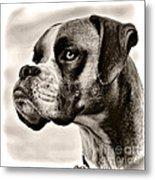 Boxer Profile Metal Print