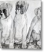 Boxer Puppy Dog Poster Print Metal Print by Olde Time  Mercantile