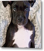 Boxer Puppy Laying In Bed Metal Print by Stephanie McDowell