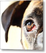 Boxer's Eye Metal Print