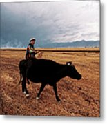 Boy Sitting Cow In Field Metal Print