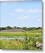 Boylan Marsh Metal Print