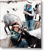 Boys Feeding Hungry Goats  Metal Print