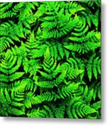 Bracken Ferns Metal Print