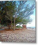 Bradenton Beach  Pine Trees Metal Print