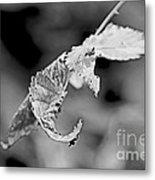 Bramble Leaves - Black And White Metal Print