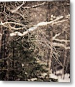 Branch In Forest In Winter Metal Print