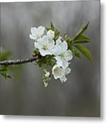 Branch Of Spring Metal Print