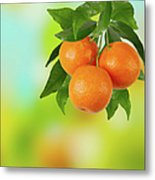 Branch Of Tangerines Metal Print