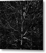 Branch Patterns Metal Print