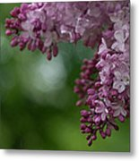 Branch With Spring Lilac Flowers Metal Print