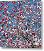 Branches And Blossoms Metal Print