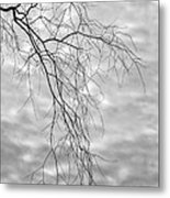 Branches And Clouds Metal Print