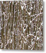 Branches And Twigs Covered In Fresh Snow Metal Print