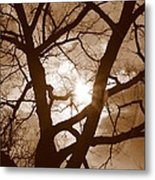 Branches In The Dark 2 Metal Print
