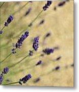Branches Of Flowering Lavender Metal Print