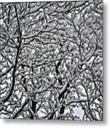 Branches Of Our Life Metal Print