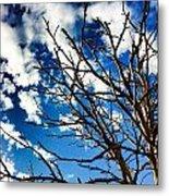 Branching Light  Metal Print