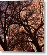 Branching Out At Sunset Metal Print