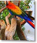 Brazilian Parrot Metal Print