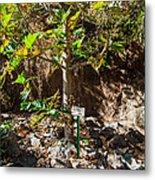 Breadfruit Tree Metal Print
