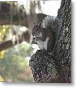 Breakfast Perch Metal Print